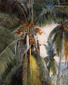 Winslow Homer - Coconut Palms, Key West,1886 Watercolor