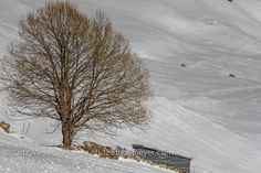 lutzmeyer posted a photo:  Montaup rural, Canillo, Vall d'Orient, Andorra, Pyrenees