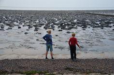 Inspectie van de Waddenzee, Oosterbierum