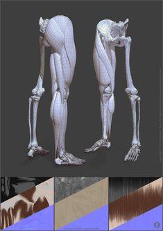 ArtStation - Leg anatomy, Jekabs Jaunarajs Leg Anatomy, Muscle Anatomy, Anatomy Study, Anatomy Reference, Hand Reference, Pose Reference, Human Skeleton Anatomy, Human Anatomy Drawing, Anatomy Models
