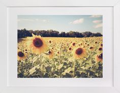 Sunflower Field by Qing Ji at minted.com