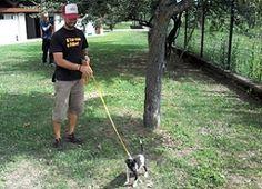 """""""AdottaMI"""", la web-app per scegliere il cane o il gatto al canile di Milano - labissa.com"""