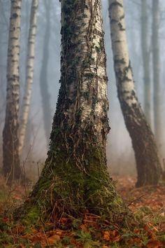 Hobbit Tree, by Andrew Lockie