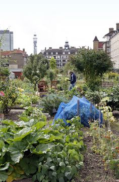 Cumberland Market Allotments, London.