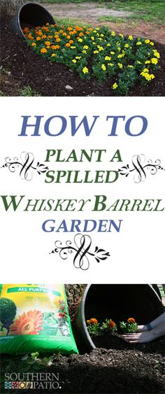Southern Patio Whiskey Barrel, some shade and a ton of gorgeous flowers can create a whimsical looking spilled garden. Whiskey Barrel Flowers, Whiskey Barrel Planter, Whiskey Barrels, Garden Front Of House, Lawn And Garden, Garden Pots, Barrel Garden Planters, Indoor Garden, Vegetable Garden