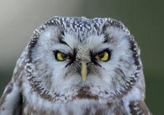 Twitter #owl