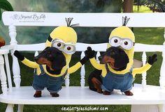 #Dachshund #Minion Costume