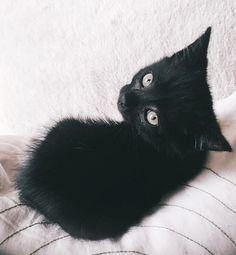 Dio the kitten ♥️🐾  #BlackKitty #BlackKitten #Cute #BlackCat #Alternative #Familiar #Goth #Gothic #GothLife #GothGirl #Emo #Vamp #Vampabilly #StrikeAPose #VogueKitten