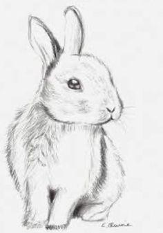 Cute Bear Drawings, Easy Drawings For Kids, Pencil Art Drawings, Cool Art Drawings, Art Drawings Sketches, Weird Drawings, Drawing Ideas, Animal Sketches, Animal Drawings
