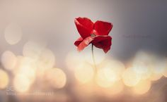 Poppy !! by MarylinGivry. @go4fotos