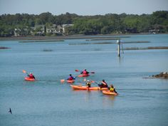 Kayaking in Broad Creek, Hilton Head Island