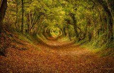 Bosques-más-hermosos-foto-7