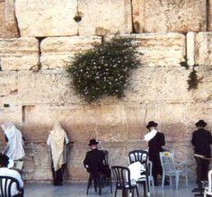Wailing Wall, Jerusalem. Incredibly moving.