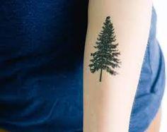 Résultats de recherche d'images pour «spruce tattoo»