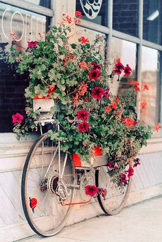 Bicycle plant stand...great for exterior wall space.