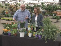 Grow with KARE: Mosquito repelling plants