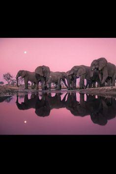 Amazing elephants!!