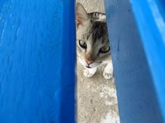 piping cat Photo by Arunita Dey Halder — National Geographic Your Shot