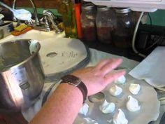 Wild Edible/Medicinal: Common Mallow-Making Marsh Mallows pt 2