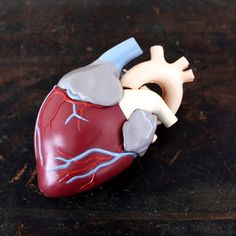 Vintage 1960s Medical Model  Heart by luckylittledot on Etsy