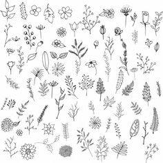 hand drawn,flowers ,flower,nature,spring,collection,pack,kit,ink,sketchy