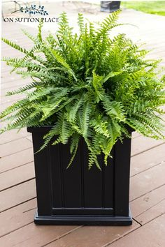 Backyard Garden Pots The Easiest Front Porch Planters Ever! Super simple and fast containers to dress up your front door. In just a few minutes your porch will go from drab to amazing! Front Porch Plants, Front Porch Flowers, Fern Planters, Outdoor Planters, Porch Planter, Landscape Design, Garden Design, Indoor Gardening Supplies, Pot Plante