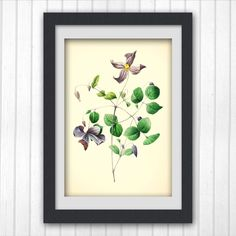 Vintage Botanical Print 172, Sale item, produced from a vintage book plate, 8x11 wall art.
