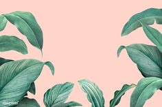 Hand drawn tropical leaves on a pastel pink background Macbook Wallpaper, Wallpaper Pc, Computer Wallpaper, Pc Computer, Mac Wallpaper Desktop, Vintage Desktop Wallpapers, Simple Wallpapers, Aesthetic Desktop Wallpaper, Aesthetic Backgrounds