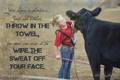 showing cattle - Google Search