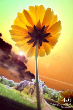 Underflower 03  flowers sky yellow storm by TiffanyDawnSmith, $10.00