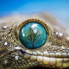 Olho azul. Surpreendente