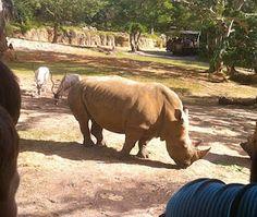 Don't miss out on Kilamanjaro Safaris at Animal Kingdom.