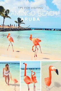 How to visit flamingo beach. Flamingo beach Aruba. Aruba vacation. Aruba honeymoon. Caribbean beaches. Aruba beach.