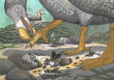 Reconstruction of nesting Dodo by Julian P. Hume