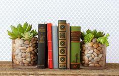 ガラスのコップに多肉植物を植えて、本の支えにしてみましょう。ナチュラルなインテリアにおすすめです。