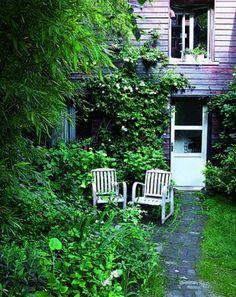 petit jardin, rosier, hydrangéas