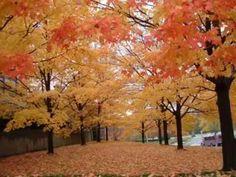 Yıldırım Gürses her sonbahar gelişinde Autumn, Youtube, Plants, Painting, Fall Season, Painting Art, Fall, Paintings, Plant