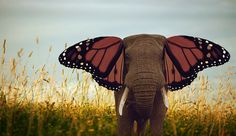 Did you know that elephants make beautiful butterflies?