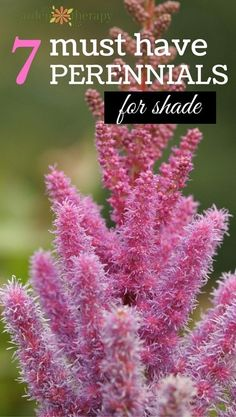 Garden Tips 7 Gorgeous Must Have Hardy Perennials for the Shade Garden.Garden Tips 7 Gorgeous Must Have Hardy Perennials for the Shade Garden Shade Garden Plants, Garden Shrubs, Garden Pests, Lawn And Garden, Garden Landscaping, Landscaping Ideas, Flowering Shade Plants, Shaded Garden, Shade Landscaping
