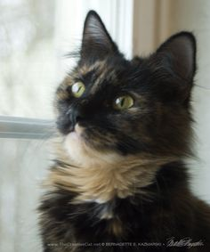 Yes, Josephine has been adopted already! In fact she was adopted just two days after I surrendered her to the Western Pennsylvania Humane Society. I surrendered Josephine on Wednesday, March 4 in t...