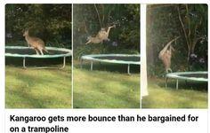 has this ever happened in ur garden. sarah.