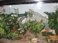 My Crabitat (Example of Forest Theme). Really good tips and daily/weekly/monthly schedule! Hermit Crab Cage, Hermit Crab Homes, Hermit Crab Habitat, Hermit Crabs, Halloween Crab, Cool Things To Build, Beautiful Tropical Fish, Crab House, Crab Shack