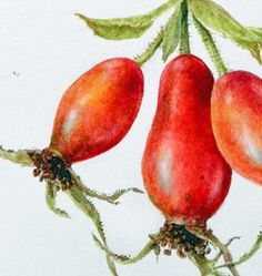 Items similar to Rose hips, original watercolour by Dianne Sutherland on Etsy Botanical Art, Botanical Illustration, Botanical Drawings, Christmas Tunes, Winter Beauty, 30 Day Challenge, Winter Landscape, Real Beauty, Ink Art