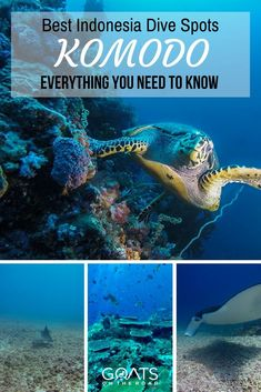 Underwater adventures in Komodo National Park | The Worlds Best Dive Spots | Guide To Diving In Indonesia | #wonderfulindonesia #bucketlist #coralreef #komododragons #adventuretravel