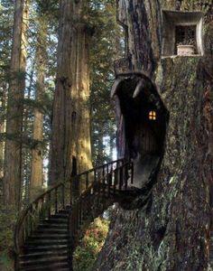Kool Tree house