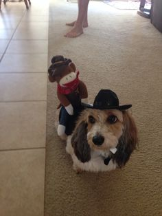Monkey riding a dog. Doxie my dog chases the tv when he see this on TV. Now it's his Halloween costume #Daushunds