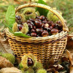 Chestnut harvest in wicker basket Chestnut Recipes, Sweet Chestnut, Chestnut Hill, Autumn Cozy, Fall Home Decor, Tis The Season, Raw Food Recipes, Belle Photo, Wicker Baskets