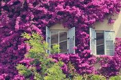 flores na janela - Pesquisa Google