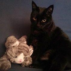 Sora con su nuevo amigo. :) #gatonegro #gato #sora #gatanegra #blackcat #cat #catsofinstagram #lovelycat #gatosdeinstagram #gatosdelmundo #pelusa #pelusanegra #amordegato #catslove #catslover #catstagram #catexperience #gatovago #catoftheday #crazycatlady #caturdays365