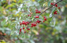 autumn+olive.jpg (1440×932)